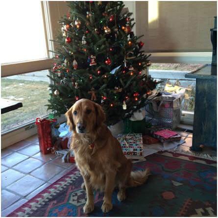 My Christmas Adventures in Colorado