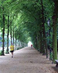 An Appealing European Gateway, Dusseldorf Is Also a Destination